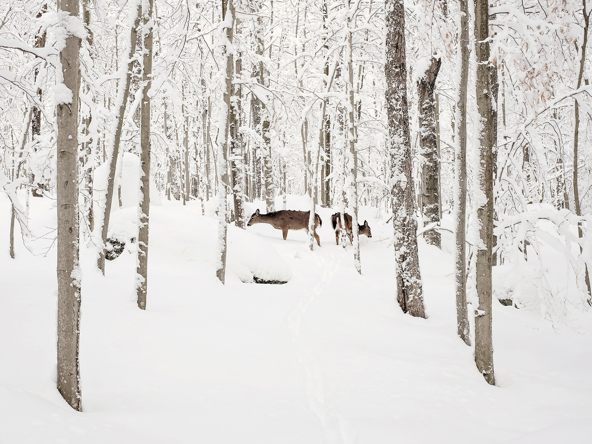 A family of deer look for food during a blizzard in Old Forge, New York, photographed by travel photographer, Todd Spoth.